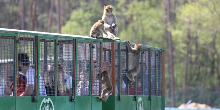 Affen-Express